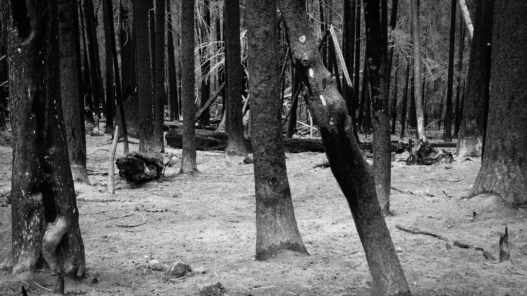 Burned out forest in the Cascades Range